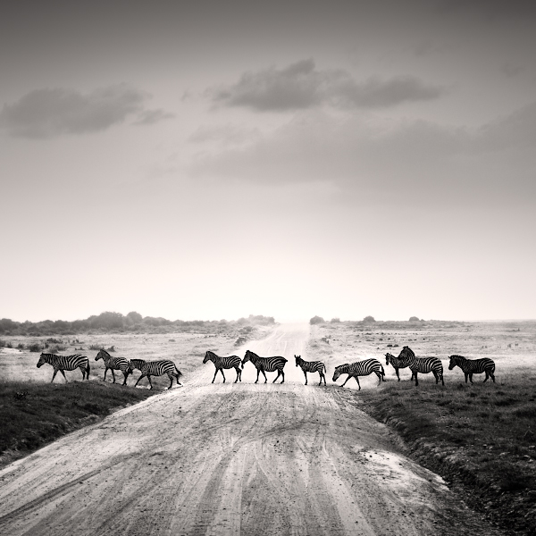 Tsavo East V by Jez92