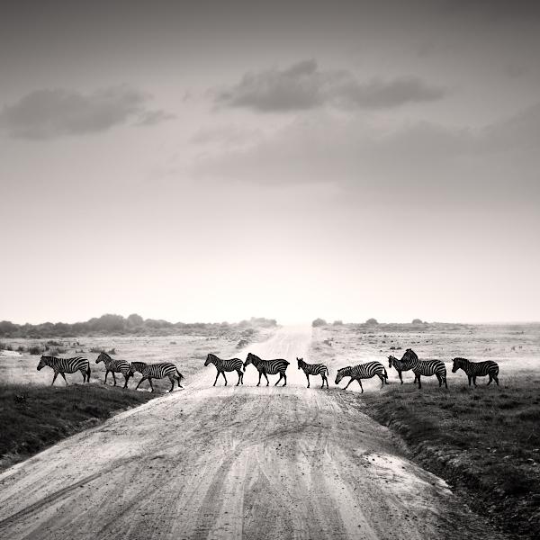 Tsavo East V by Jez92