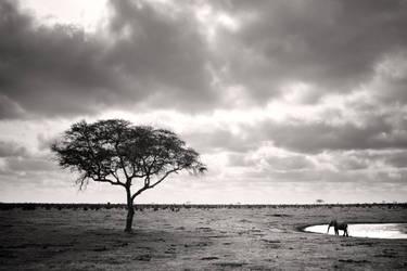 Amboseli IV