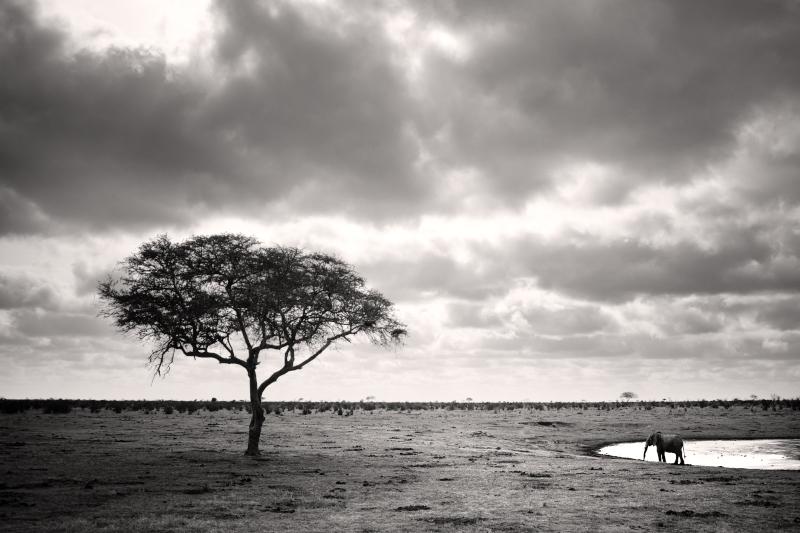 Amboseli IV by Jez92