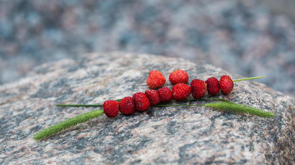 Wild strawberries by Ylvali