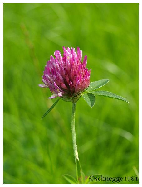 Flower 2 by schnegge1984