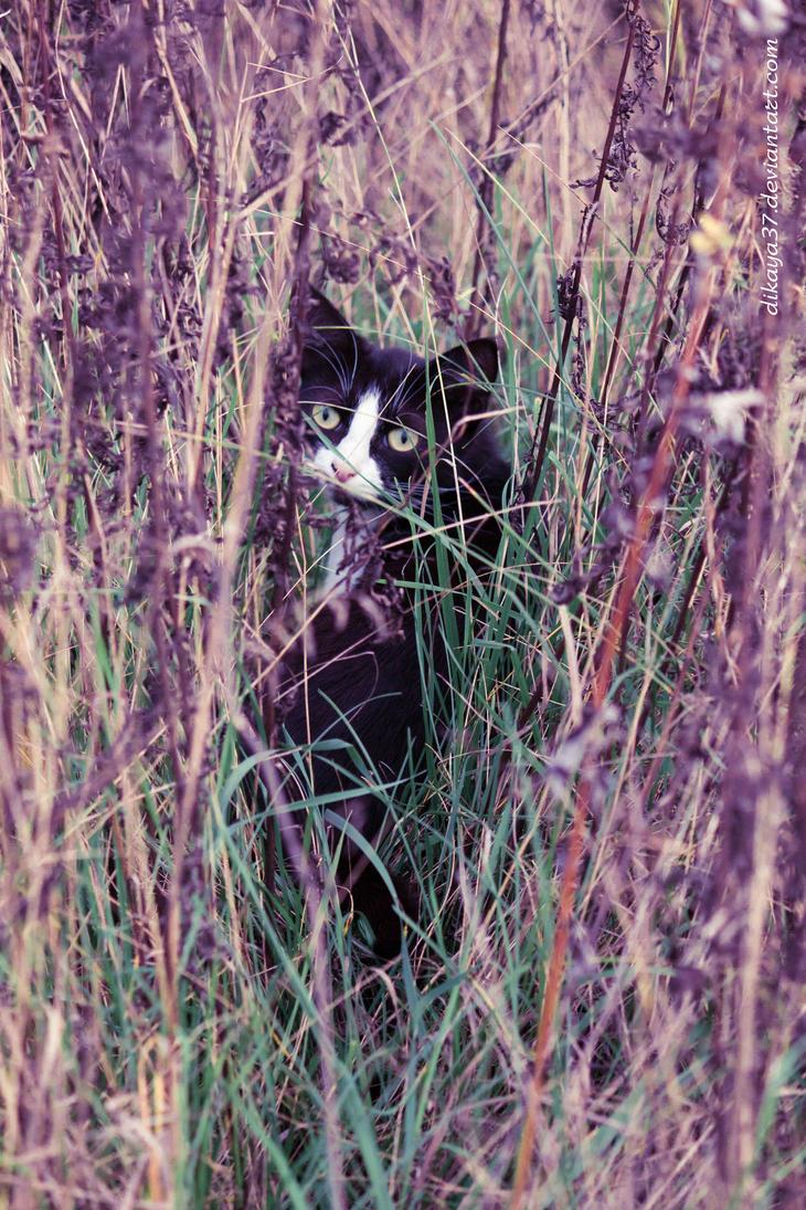 lavender cat - photo #9