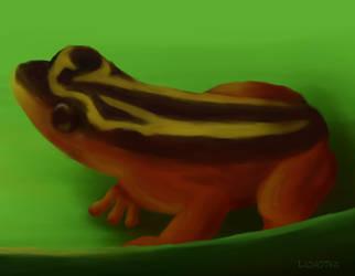 Animal of May 2015: Golden Tree Frog by lichotka