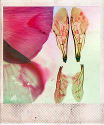 Sorrow Through a Pinhole 04 by LucyJOrchard
