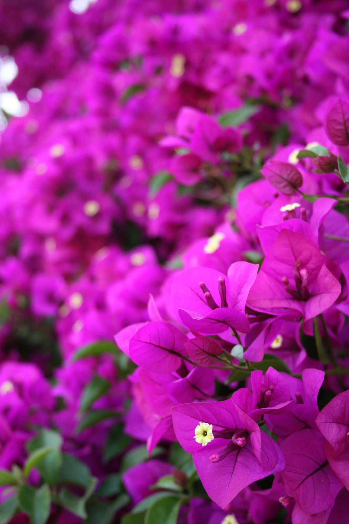Purple Flowers by HaMaSeR