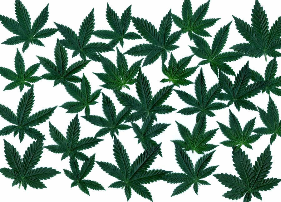Cannabis Leaves 02