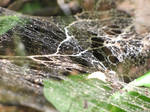 Curious web