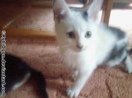 Young Bobinka
