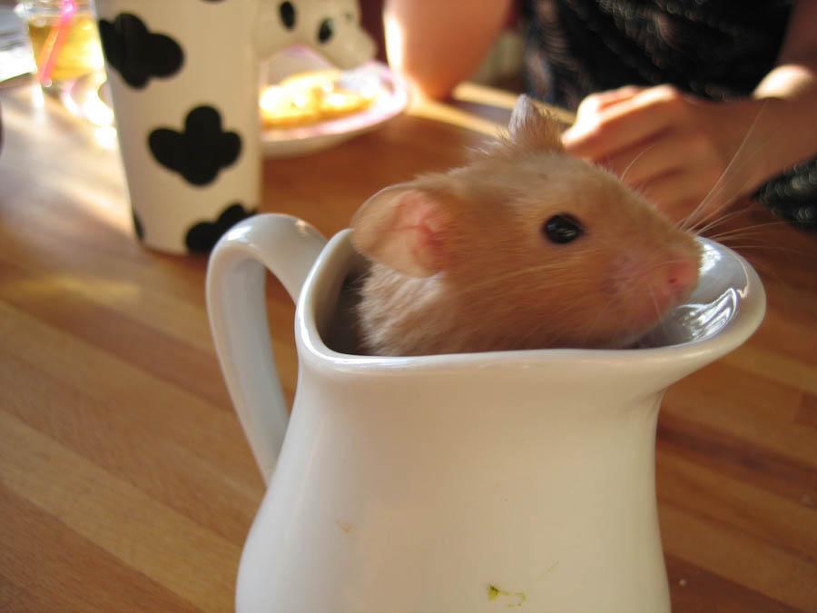 Hammy, Please look, too cute..