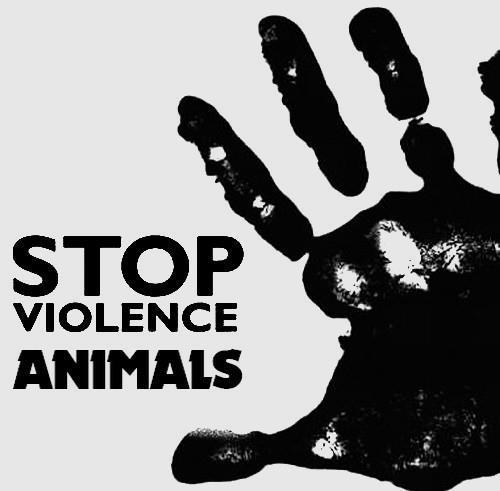 Stop violence animals by BEllebasi