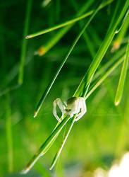 White Spider by harajukumatt
