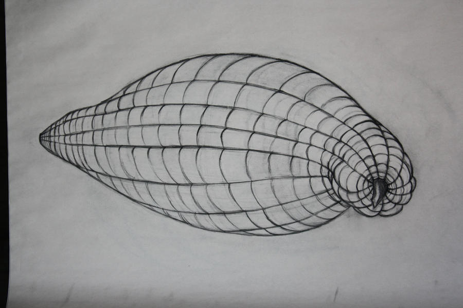 What Is Cross Contour Line Drawing : The gallery for gt cross contour lines