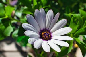 Flower by streettom