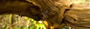 A Groovy log