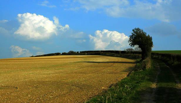 Curly Fields