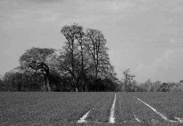 Ploughed Trees