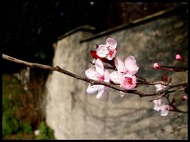 Spring by AnitaSadowska