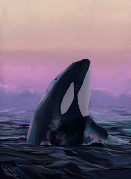 Whale study