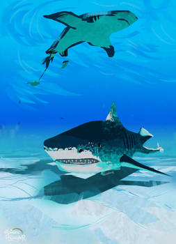 Shark study