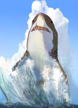 Shark study two