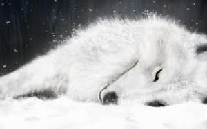 Firewolf615's Profile Picture