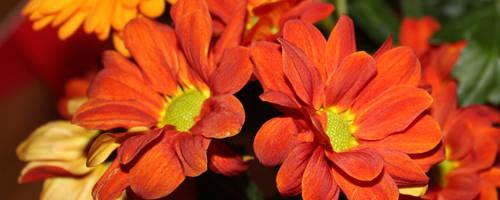 Dual Flowers 1 by jezmck
