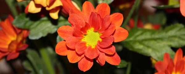 Dual Flowers 2