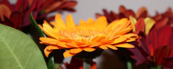 Dual Flowers 3 by jezmck
