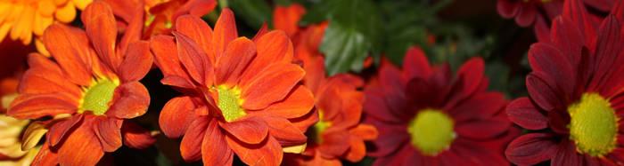 Triple Flowers 1 by jezmck