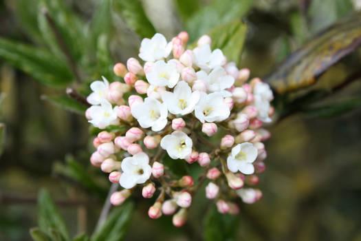 Flower-Blossom 1