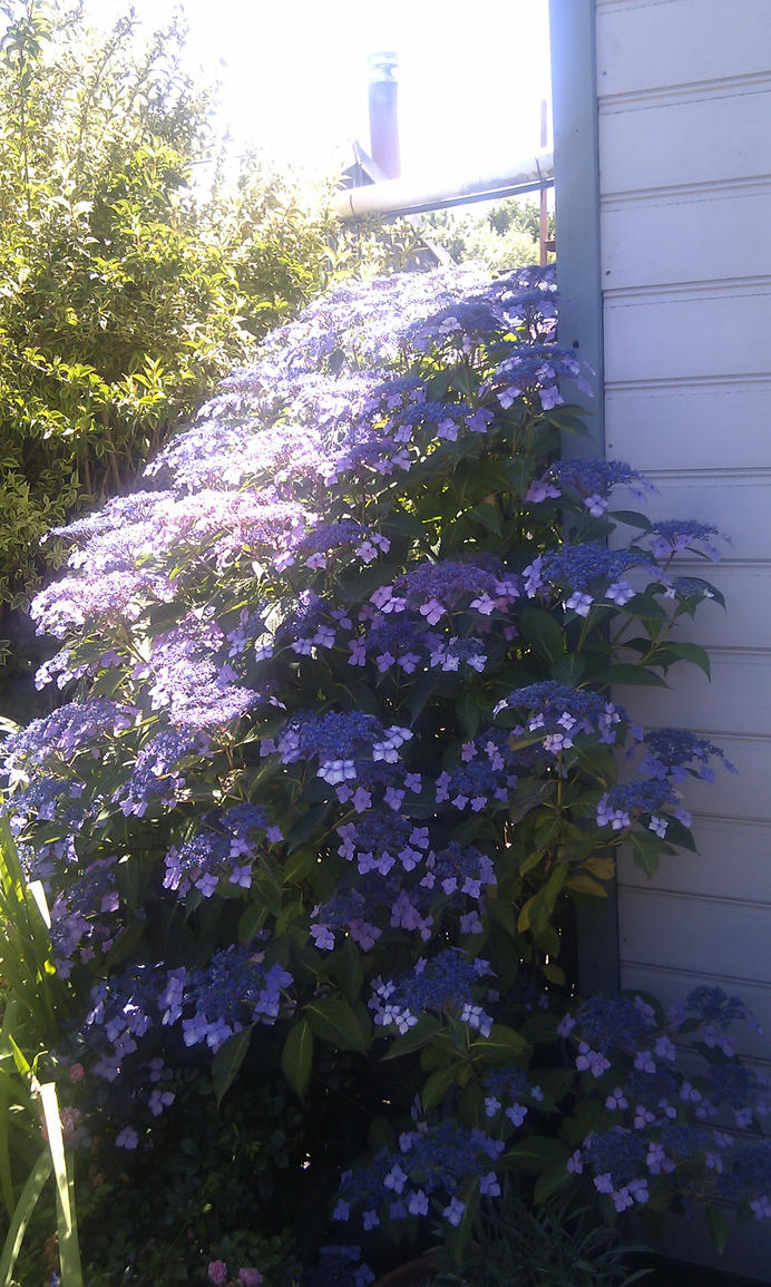 Purple Blue Plant by Rovaniik on DeviantArt