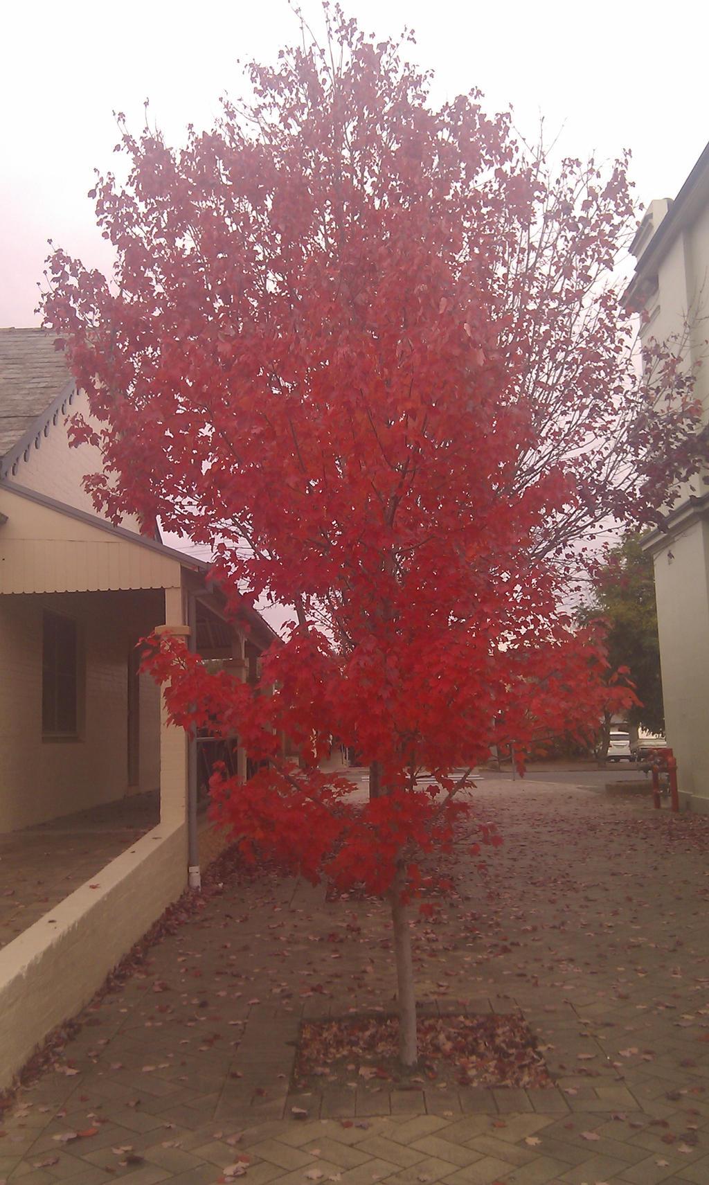 Red Tree by Rovaniik on DeviantArt