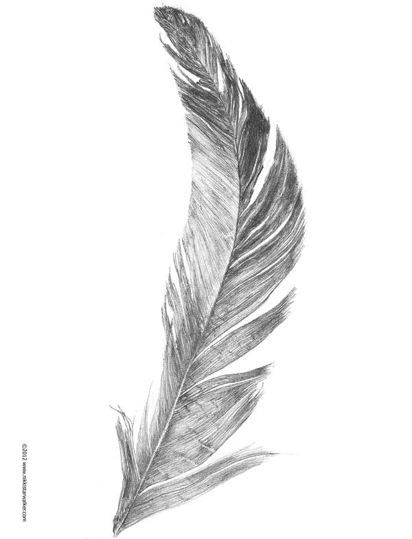 Feather Sketch by nikk...