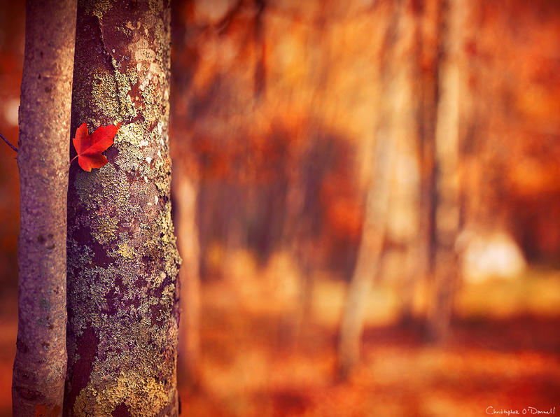 Jesen - Page 7 Autumn_s_bloom_by_mainescapes-d60kw5y