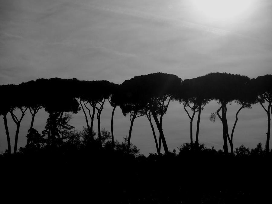 Trees by 0IZ