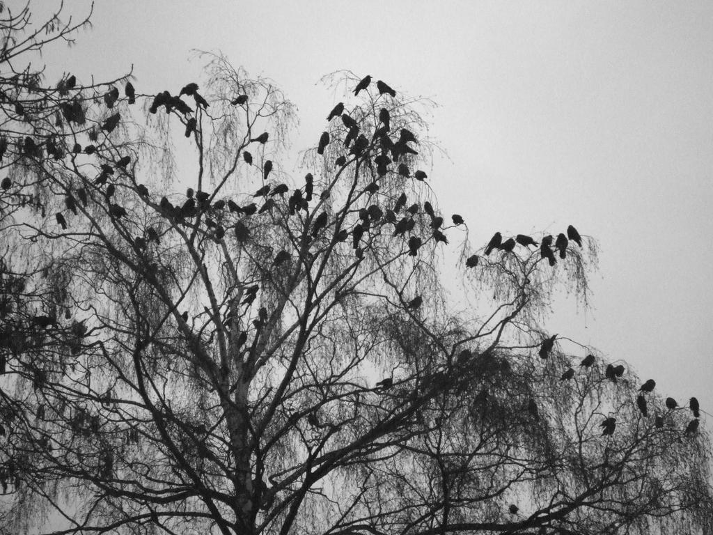 Birdrops by 0IZ