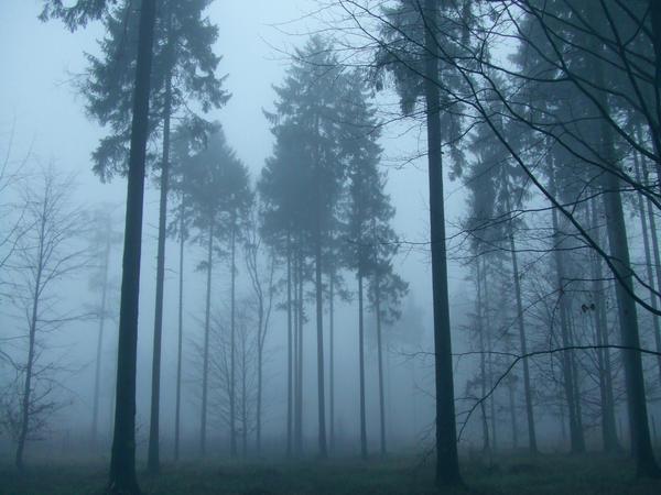 These Woods Breathe Evil by 0IZ