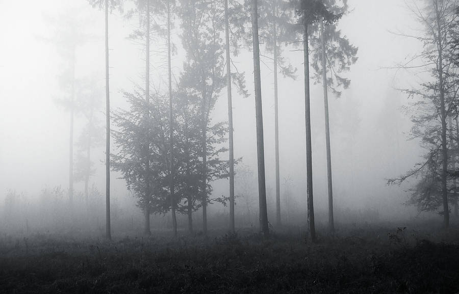 The Cold White Light by 0IZ