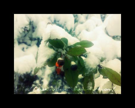 http://fc05.deviantart.net/fs71/f/2010/010/3/b/Winter_2_by_Saskiauchiha3.png