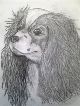Tessi portrait