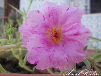 Flowers_ by AmalHc