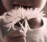 flower hunger