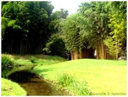 Jardin japonais 2