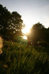 summer glow by starkey7