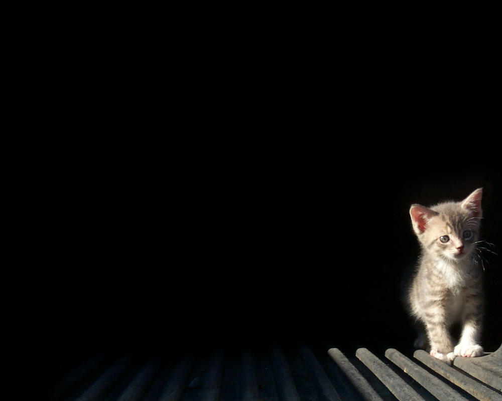 Kitten by mibi