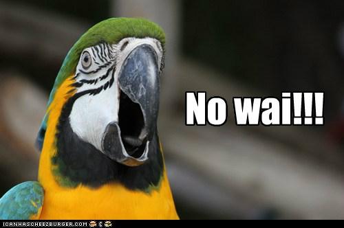 No Wai parrot by FaultofDan