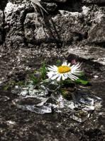 Flower's fragments by Mefistofelicat