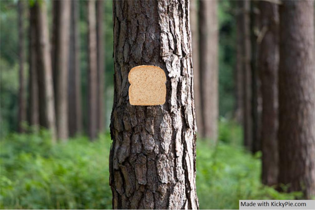 Bread Stapled To Tree by KickyPie