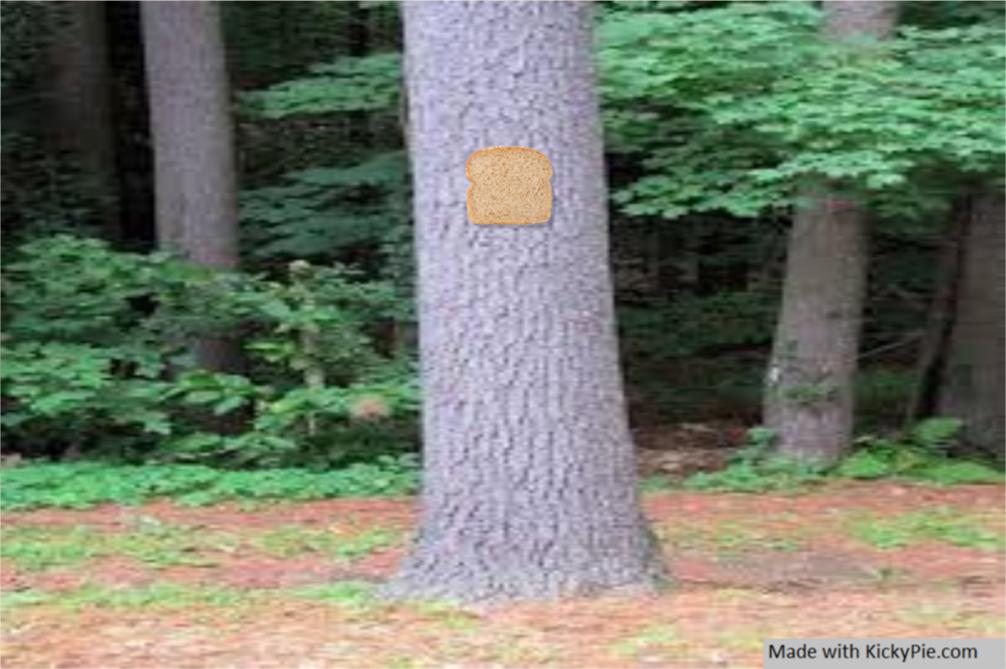Bread-stapled-to-a-pale-tree by KickyPie